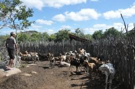 DSC 1606 270x179 - Governo apoia criador de cabras que se tornou referência no Cariri