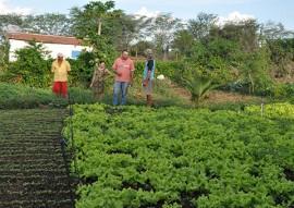 Emater producao e venda de hortalicas muda vida de familia em suma agricultura 3 270x191 - Governo do Estado incentiva agricultura familiar em Sumé