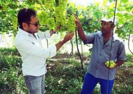 Uvas1 270x191 - Governo estimula produção de uva no Sertão como alternativa de renda