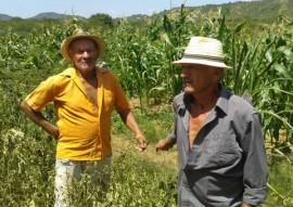 agricultores do tarifa verde produzem mesmo com a estiagem 3 270x191 - Agricultores beneficiários do Tarifa Verde produzem alimentos