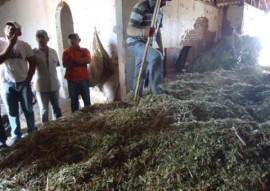 emater criadores de taperoa parende armazenamento de racao em saco silagem 1 270x191 - Criadores de Taperoá aprendem prática de armazenamento da ração em saco