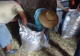 emater criadores de taperoa parende armazenamento de racao em saco silagem 3 270x191 - Criadores de Taperoá aprendem prática de armazenamento da ração em saco