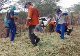 emater criadores no curimatau aprendem a pratica de ensilagem silos picui 2 270x191 - Governo do Estado ensina a prática deensilagem aos criadores do Curimataú