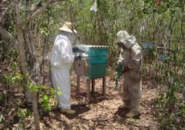 emater governo discute certificacao do cif para apicultores itabaiana 1 270x191 - Governo do Estado discute certificação do SIF para apicultura