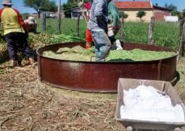 sllos 27 05 jpg 1 270x191 - Governo promove Dia de Campo sobre práticas de convivência com semiárido