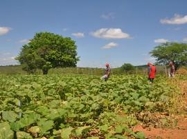 PAA SousaC 270x202 - Agricultores assistidos pela Emater comercializam R$ 3,3 milhões ao Programa de Aquisição de Alimentos