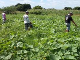 PAA SousaCs 270x202 - Agricultores assistidos pela Emater comercializam R$ 3,3 milhões ao Programa de Aquisição de Alimentos