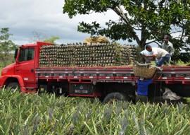 emater cultivo de abacaxi suconor em SAPE 2 270x191 - Governo incentiva cultivo da cultura de abacaxi na Paraíba