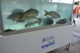 pis375 270x179 - Empasa participa de 1º Festival do Peixe em Camalaú