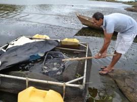 pis485 270x202 - Governo do Estado participa de festival de peixe e distribui alevinos em Camalaú