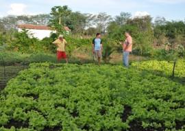 07.07.15 emater inclusão social na agricultura familiar foto emater 2 270x191 - Governo incentiva agricultura familiar e garante inclusão social de agricultores
