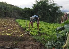07.07.15 emater inclusão social na agricultura familiar foto emater 4 270x191 - Governo incentiva agricultura familiar e garante inclusão social de agricultores