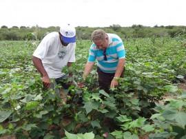 Algodão S 270x202 - Governo prepara Dia de Campo sobre algodão colorido e artesanato