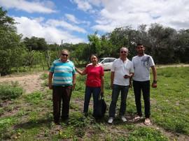 Algodão Salgado S 270x202 - Governo prepara Dia de Campo sobre algodão colorido e artesanato