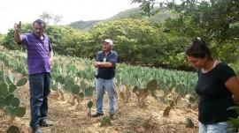 Catolé palma2 28 07 270x151 - Técnicos ensinam agricultor a produzir e usar defensivos naturais em Catolé do Rocha