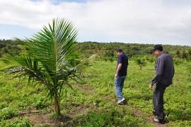 DSC 0166 270x179 - Emater incentiva plantio do coco verde com foco na produção sustentável