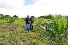 DSC 0171 270x179 - Emater incentiva plantio do coco verde com foco na produção sustentável