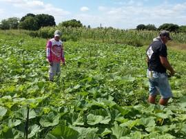 agrucultura familiar 1 270x202 - Governo lança Plano de Fortalecimento de Comercialização da Agricultura Familiar em Picuí nesta quinta-feira