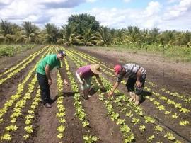 agrucultura familiar 3 270x202 - Governo lança Plano de Fortalecimento de Comercialização da Agricultura Familiar em Picuí nesta quinta-feira