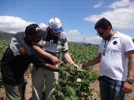 4 algodao 21 08 270x202 - Governo realiza Dia de Campo para estimular produção de algodão colorido