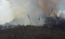 florestal2 270x162 - Bombeiros combatem 155 incêndios em julho e alertam para risco de queimadas
