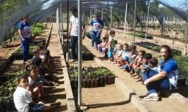 horta2S.Joaodo Cariri 270x162 - Governo leva educação ambiental às escolas em São João do Tigre