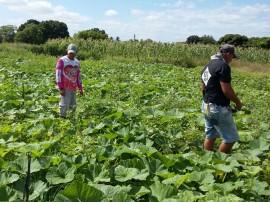 09.09.15 fortalecimento agricultura familiar 5 270x202 - Governo discute Fortalecimento da Agricultura Familiar em Cajazeiras nesta sexta-feira