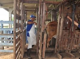 15.09.15 emepa realiza teste prognie gadosindi aumenta 1 270x202 - Emepa realiza teste Progênie em gado Sindi para aumentar a produção de leite