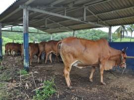 15.09.15 emepa realiza teste prognie gadosindi aumenta 2 270x202 - Emepa realiza teste Progênie em gado Sindi para aumentar a produção de leite