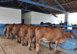 Emepa leilao gado Sindi 270x191 - Emepa realiza leilão de 48 animais das raças Gir, Guzerá e Sindi neste sábado