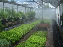 FOTO 2 NÚCLEO DE PLANTAS MEDICINAIS E AROMÁTICAS BAG 270x202 - Governo estimula produção de plantas medicinais e aromáticas em Lagoa Seca