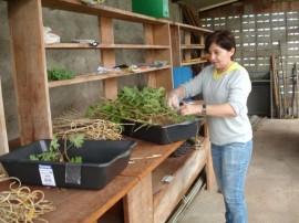 FOTO 3 NÚCLEO DE PLANTAS MEDICINAIS E AROMÁTICAS ÁREA DE APOIO 270x202 - Governo estimula produção de plantas medicinais e aromáticas em Lagoa Seca