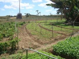 Pnae 5 270x202 - Agricultores paraibanos comercializam produtos ao Pnae apesar da estiagem
