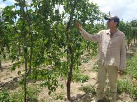 Pnae Picui 4 Gotejamento 270x202 - Agricultores paraibanos comercializam produtos ao Pnae apesar da estiagem