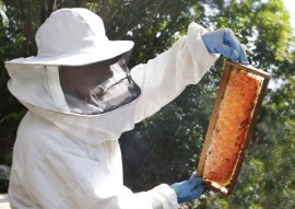 cooperar baia da traicao apicultura fotos kleide teixeira 004 270x191 - Governo incentiva apicultura e oferece alternativa de renda para famílias da zona rural