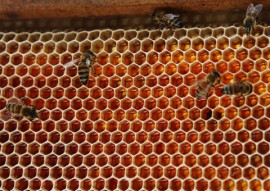 cooperar baia da traicao apicultura fotos kleide teixeira 036 270x191 - Governo incentiva apicultura e oferece alternativa de renda para famílias da zona rural