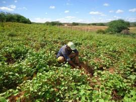 irrigação3 08 09 270x202 - Paraíba lidera contratações do Pronaf na região Nordeste