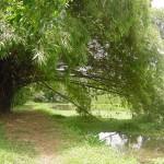 Acesso ao passeio nas trilhas do Jardim Botânico_1
