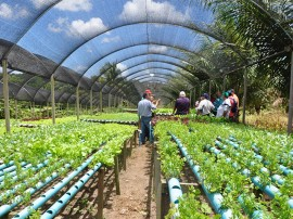 DSC 1169 hidroponia 270x202 - Governo do Estado orienta agricultores sobre economizar água usando sistema hidropônico