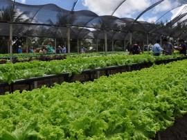 DSC 1178 hidroponia 270x202 - Governo do Estado orienta agricultores sobre economizar água usando sistema hidropônico