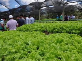 DSC 1180hidroponia 270x202 - Governo do Estado orienta agricultores sobre economizar água usando sistema hidropônico
