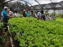 DSC 1187 Hidroponia 270x202 - Governo do Estado orienta agricultores sobre economizar água usando sistema hidropônico