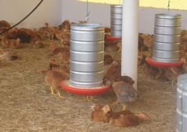 cooperar paraiba cria sistema de desinfeccao de agua para consumo animal 1 270x191 - Governo apoia projeto de sistema de desinfecção de água para o consumo animal