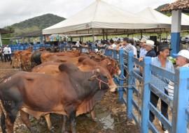 emepa leilao bovino foto joao francisco 94 270x191 - Paraíba registra maior crescimento de rebanho bovino do Nordeste, revela IBGE