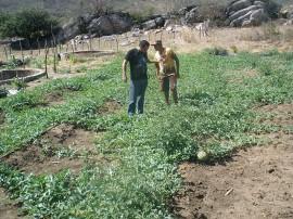 Melão 13 11 270x202 - Cultivo de hortaliças incentiva agricultura familiar em Nazarezinho