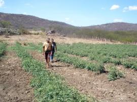Melancia 13 11 2015 270x202 - Cultivo de hortaliças incentiva agricultura familiar em Nazarezinho