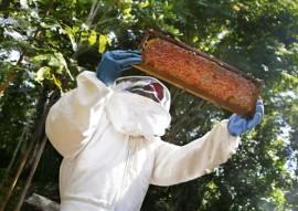 cooperar baia da traicao apicultura fotos kleide teixeira 006 270x191 - Governo do Estado realiza Dia Especial em Apicultura na Baía da Traição