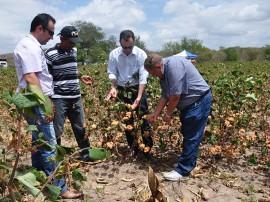 DSC 0117 algodao1 270x202 - Governo do Estado impulsiona cultura do algodão na Paraíba