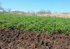 Nazarezinho familias mudam de vida cultivando hortaliças 1 270x191 - Governo do Estado incentiva agricultura familiar em Nazarezinho