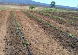 Nazarezinho familias mudam de vida cultivando hortaliças 21 270x191 - Governo do Estado incentiva agricultura familiar em Nazarezinho